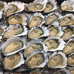 Oysters thumbnail
